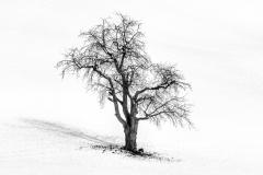 Konolfingens Lonley Tree